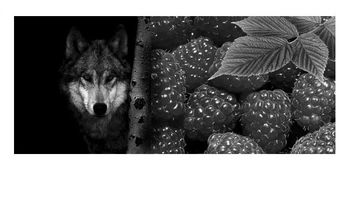 COLLAGE DIPTYQUE -  Loup, y es-tu  -